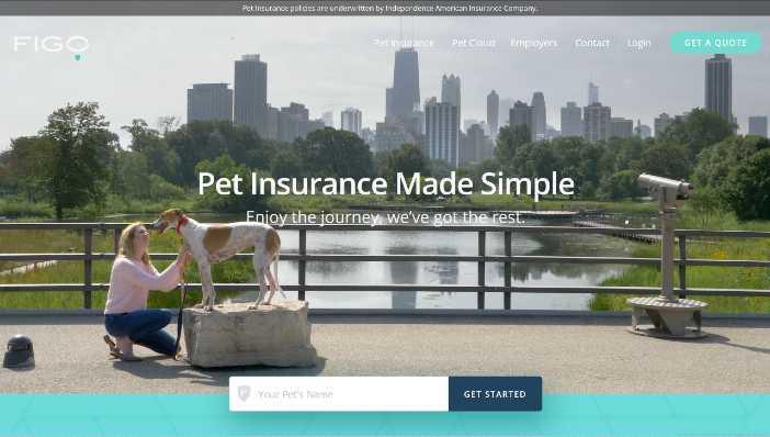 Figo Insurance